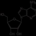 <b>Adennosine</b> làm giảm nếp nhăn.