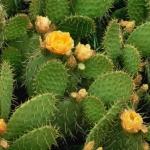 <b> Chất Trehalose từ cây Xương Rồng </b>giúp tăng cường độ ẩm cho da