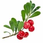 <b>Thành phần Arbutin </b>được từ quả Bearberry: Có tác dụng giúp ức chế sự tăng trưởng tế bào sắc tố