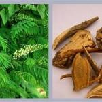 <b>Chiết xuất rễ khổ sâm Sophora Angustifolia</b> Chống viêm/ bảo vệ da